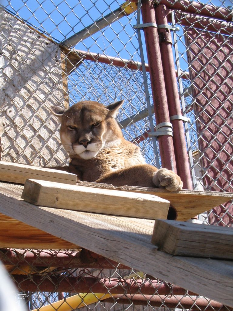 Colorado School of Mines Wild Felines class